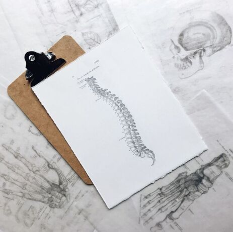 Image of anatomically sketched spine and skull.